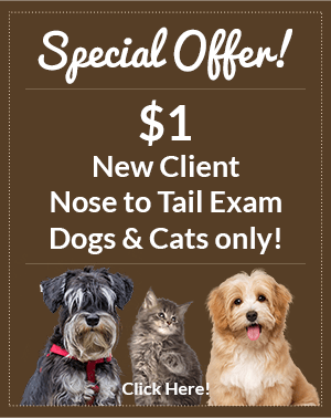 Special Offer! $1 New Client Nose to Tail Exam. Dogs and cats only! Click here!